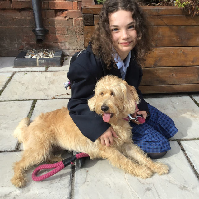 nottingham girls' high school student sat with school dog saffy